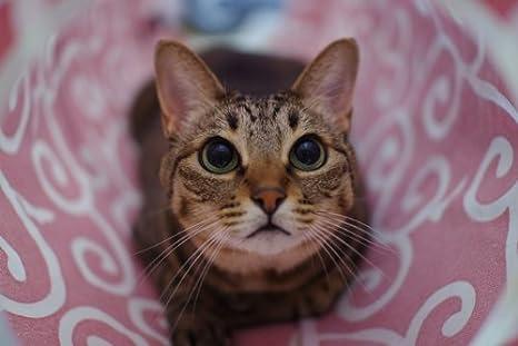 Amazon.com: cat1st Ninja túnel para gato (rojo) mejor ...