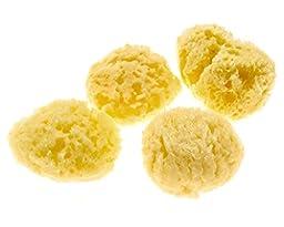 4-Pack of Hermit Crab Sea Sponges (All Natural Hermit Crab Sponge)