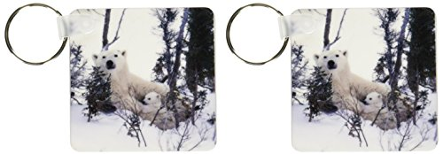 - 3dRose Manitoba, Churchill. Polar Bear cubs-CN03 GJE0027 - Gavriel Jecan - Key Chains, 2.25 x 4.5 inches, set of 2 (kc_70153_1)