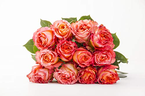 Martha Stewart Roses by BloomsyBox - One Dozen Orange & Pink Free Spirit Roses Selected by Martha and Hand-Tied, Long Vase Life