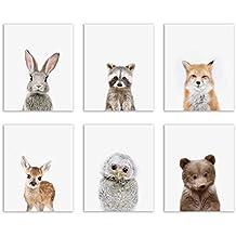 Baby Woodland Animals Poster Prints - Set of Six Adorable Furry Portraits Wall Art Decor 8x10 Raccoon - Deer - Owl - Bear - Bunny - Fox