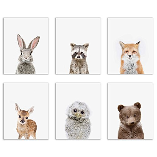 Baby Woodland Animals Poster Prints - Set of Six Adorable Furry Portraits Wall Art Decor 8x10 Raccoon - Deer - Owl - Bear - Bunny - Fox