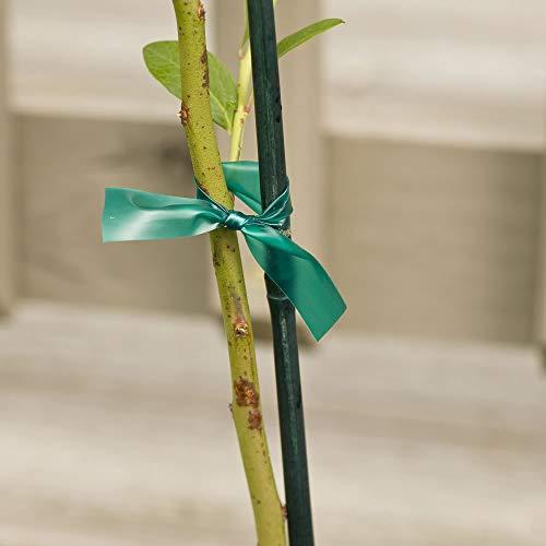 Gardener's Blue Ribbon T006B Sturdy Stretch Tie by Gardener's Blue Ribbon (Image #4)