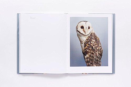 Bird Love by ABRAMS (Image #5)