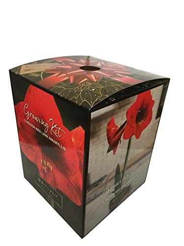 Red Lion Amaryllis Kit - Gift Box - Large Bulb, Pot and Soil
