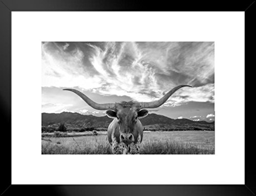 Texas Longhorn Bull Standing in Pasture Close Up Black and White Photo Art Print Matted Framed Wall Art 26x20 inch