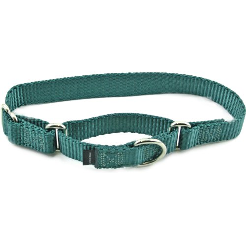 Premier Collar, Large 1-Inch, Teal, My Pet Supplies