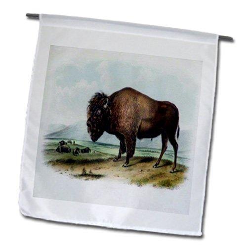 3dRose fl_119832_1 Vintage John J Audubon American Bison Painting Pd-Us Garden Flag, 12 by 18-Inch