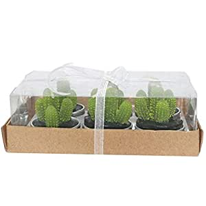 lumanuby 6pcs/caja Cactus velas Multi - carne artificial en ...
