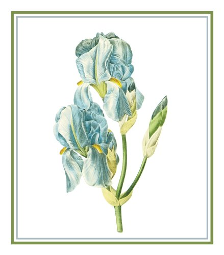 (Orenco Originals Sweet Iris Flower by Redoute Counted Cross Stitch Pattern)