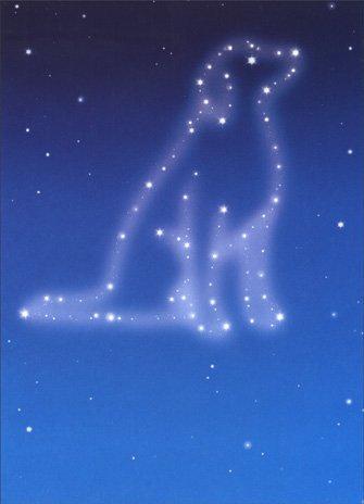 (Dog Sympathy Stars Pet Sympathy Card)