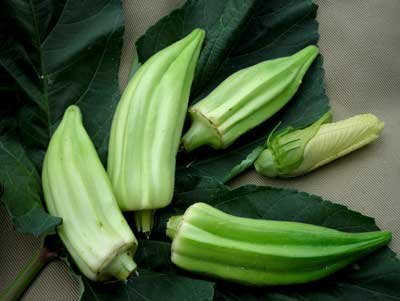 David's Garden Seeds Okra Beck's Big Buck (Snapping Okra) D69120 (Green) 25 Organic Heirloom Seeds