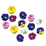 royal icing flowers - Mini Pansy Assortment