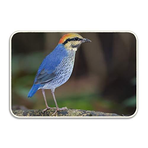 Niaocpwy Bird Indoor Outdoor Entrance Rug Floor Mats Shoe Scraper Doormat