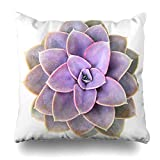 Ahawoso Throw Pillow Cover Fresh Cactus Perle Von Nurnberg Succulent Nature Echeveria Purple Flower Leaf Top Garden Cacti Design Home Decor Pillow Case Square Size 16x16 Inches Zippered Pillowcase