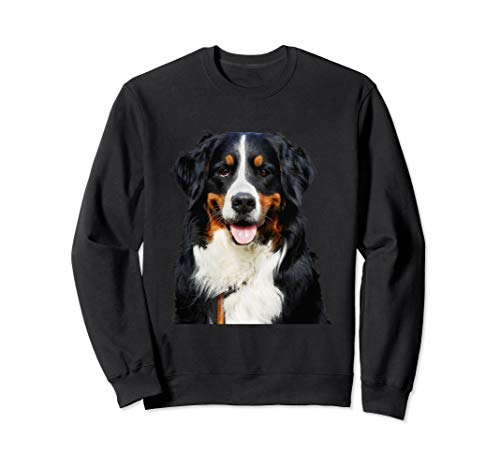 Funny Portrait of Bernese Mountain Dog -