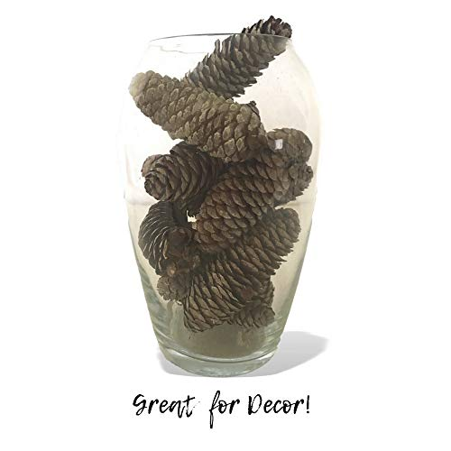 Banberry Designs Sugar Pine Cones – Set of 14 Large Pine Cones with a White-Washed Finish – Fall and Winter Decor by Banberry Designs (Image #3)