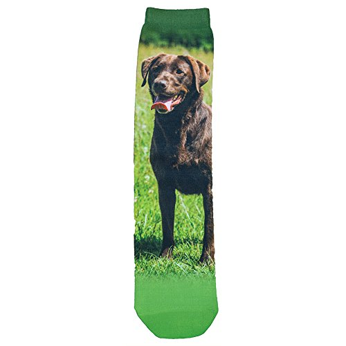 Chocolate Labrador Retriever Sublimated Socks - One (Labrador Retriever Socks)