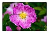 Tree26 Indoor Floor Rug/Mat (23.6 x 15.7 Inch) - Rose Rosa Gallica Historic Rose Flowers Pink White