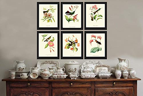 - Hummingbirds Botanical Print Set of 6 Art Antique Beautiful Tripical Birds Flowers Plants Illustration Home Room Decor Wall Art Unframed