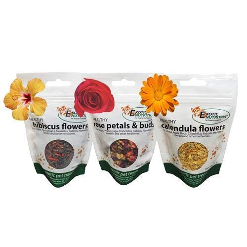 Exotic Nutrition Flower Treat 3 Pack - Small Animal Pet Treat - for Squirrels, Guinea Pigs, Rabbits, Chinchillas, Prairie Dogs, Degus, Hamster, Gerbils, Herbivores