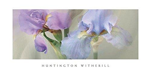 Witherill Iris - Iris XXII Art Print Art Poster Print by Huntington Witherill, 36x18
