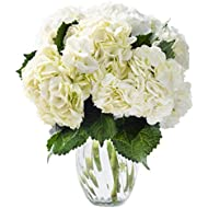 KaBloom Summer Beauty Bouquet of 6 White Hydrangeas with Vase