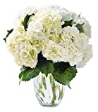 KaBloom A Dance with Fresh Colombian Hydrangeas: 6 White Hydrangeas with Vase
