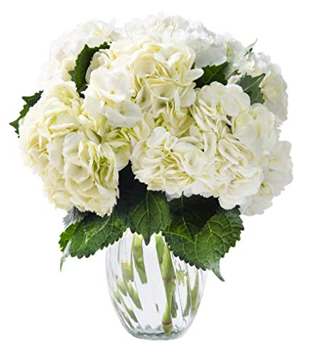 - KaBloom Summer Beauty Bouquet of 6 White Hydrangeas with Vase