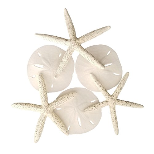 Tumbler Home Set of Starfish and Sand Dollars - 3 Finger Starfish 4 to 6 inch and 3 Sand Dollars 3 to 3.5 inch - Beach -