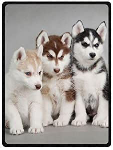 Amazon.com: Siberian Husky Puppies Dogs Pets Queen Size