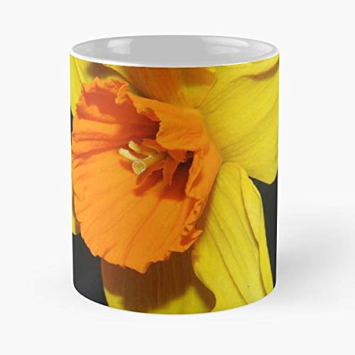 Daffodil Flower Nature - Ceramic Mugs