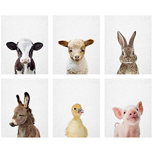 Baby Farm Animal Prints 8x10 tx  Set of 6 Adorable Furry Baby Animal Portraits  Lamb Cow Donkey Duckling Bunny Piglet  Nursery Animal Wall Art  Nursery Decor Unframed Prints