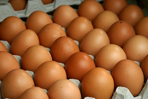 GRASS FED, NON-GMO FED FREE RANGE BROWN & COLORED CHICKEN EGGS - 4 DOZEN