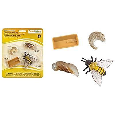 Safari Ltd Safariology the Life Cycle of a Honey Bee: Toys & Games