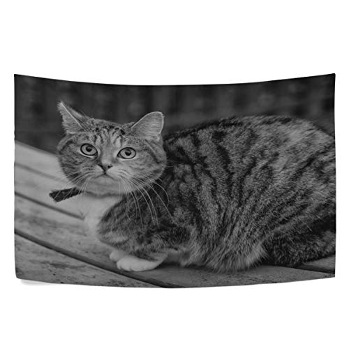 (RH Studio Tapestry Cat Tabby Sitting Bw Wall Hanging Tapestries Dorm Livingroom Bedroom Bedspread Sofa Cover Beach Towel(60x40inch))