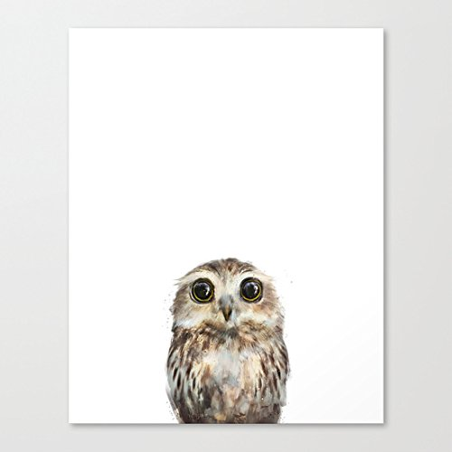 Ushopping - Little Owl - Canvas Prints Artwork 12