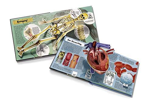 Pop-up-Buch Menschlicher Körper