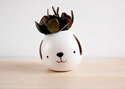 Macetero redondo de ceramica el perro Pepe blanco para interior y exterior. Maceta pequeña de