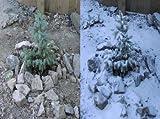 Biodegradable Artificial Snow