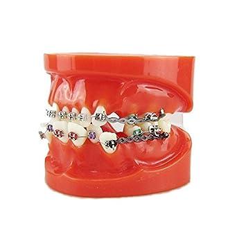 Earlywish Dental Ortodoncia Maloclusión Corret Dientes w/brackets Elastolink cadena modelo: Amazon.es: Industria, empresas y ciencia