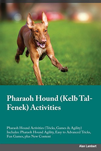 Pharaoh Hound Kelb Tal-Fenek Activities Pharaoh Hound Activities (Tricks, Games & Agility) Includes: Pharaoh Hound Agility, Easy to Advanced Tricks, Fun Games, plus New Content
