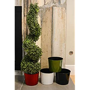 Admired by Nature Aritificial Boxwood 6