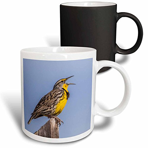 3dRose Danita Delimont - Birds - USA, Utah, Antelope Island, Western Meadowlark singing a song. - 11oz Magic Transforming Mug (mug_260204_3) - Meadowlark Three Light