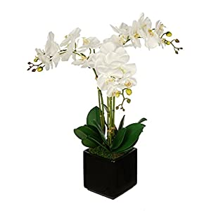 House of Silk Flowers Artificial White Triple Stem Orchid in Cube Vase (Black) 113