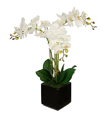 House of Silk Flowers Artificial White Triple Stem Orchid in Cube Vase -