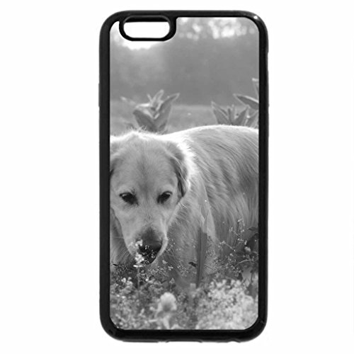 iPhone 6S Case, iPhone 6 Case (Black & White) - Dog on the meadow