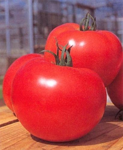 momotaro-tomato-seed