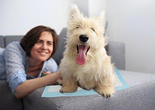 YOMMY® Empapadores Perros Para Mascotas Toallitas de entrenamiento para mascotas 60 x 90 cm YM-0300(12 Unidades): Amazon.es: Coche y moto
