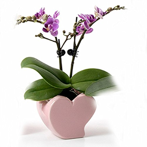 - Better-Way Lovely 4 inch Heart Shaped Ceramic Flower Pot Holder, Ceramic Succulent Plant Containers Orchid Planter for Home Office Desktop Decoration